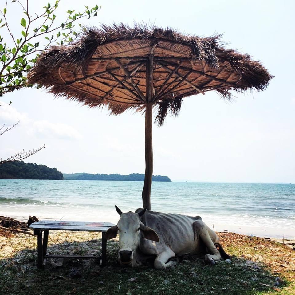 Et pendant ce temps là au Cambodge...